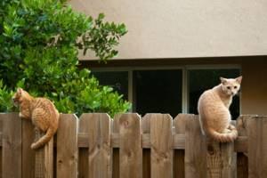 Как заставить соседа по участку держать собаку дальше от забора — Юридические советы