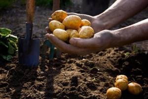 Оформление земли, выделенной в 1990-х годах под посадку картофеля — Юридические советы